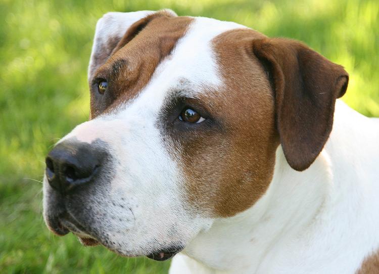 hundefotograf hannover hundefotografie hunde fotoshooting-001
