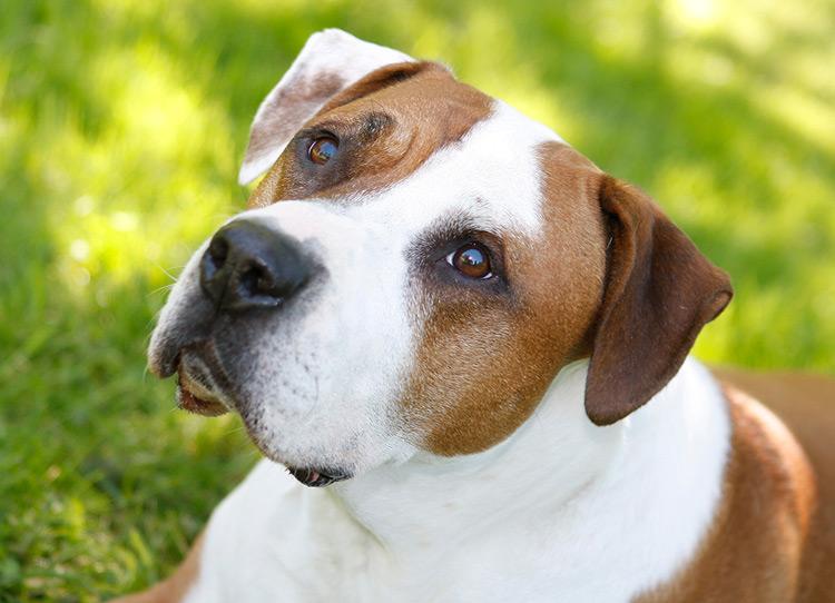 hundefotograf hannover hundefotografie hunde fotoshooting-005