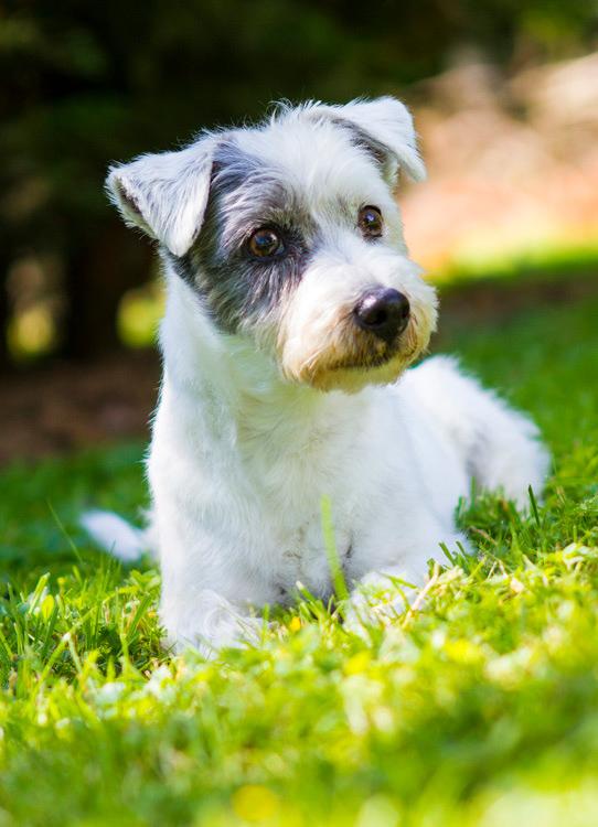 fotoshooting hund in hannover hundefotografie hundefotograf 020