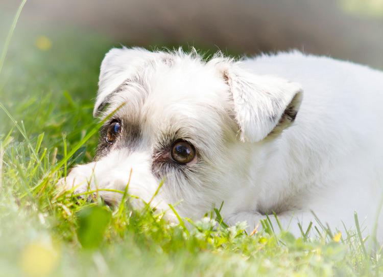 fotoshooting hund in hannover hundefotografie hundefotograf 030