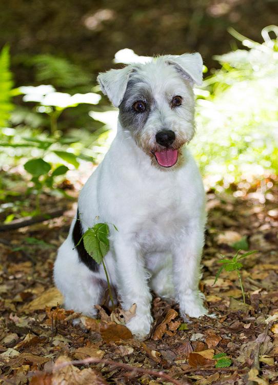 fotoshooting hund in hannover hundefotografie hundefotograf050