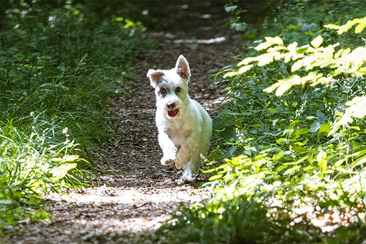 fotoshooting hund in hannover hundefotografie hundefotograf 078