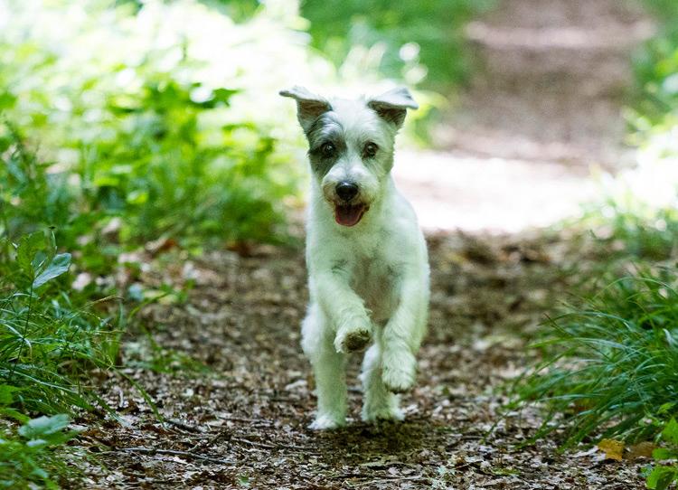 fotoshooting hund in hannover hundefotografie hundefotograf 070
