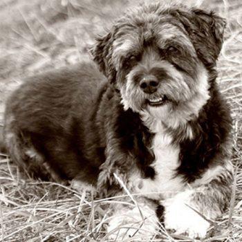 hundefotograf hannover hundefotografie hunde fotoshooting-01
