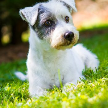 hundefotograf hannover hundefotografie hunde fotoshooting-020
