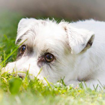hundefotograf hannover hundefotografie hunde fotoshooting-030