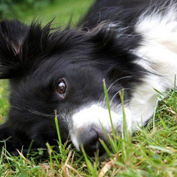hundefotograf hannover hundefotografie hunde fotoshooting-03