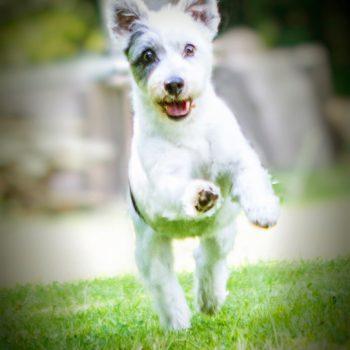 hundefotograf hannover hundefotografie hunde fotoshooting-040