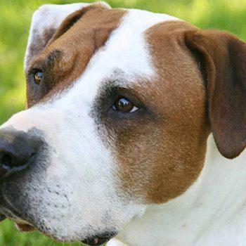 hundefotograf hannover hundefotografie hunde fotoshooting-04