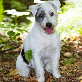 hundefotograf hannover hundefotografie hunde fotoshooting-050