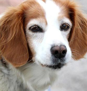 hundefotograf hannover hundefotografie hunde fotoshooting-05