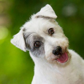 hundefotograf hannover hundefotografie hunde fotoshooting-060