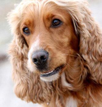 hundefotograf hannover hundefotografie hunde fotoshooting-06