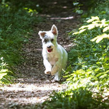 hundefotograf hannover hundefotografie hunde fotoshooting-070