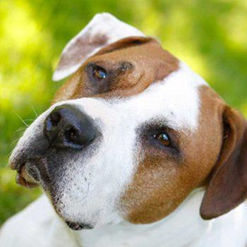 hundefotograf hannover hundefotografie hunde fotoshooting-07