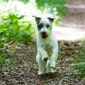 hundefotograf hannover hundefotografie hunde fotoshooting-080
