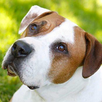 hundefotograf hannover hundefotografie hunde fotoshooting-09