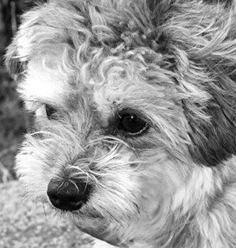 hundefotograf hannover hundefotografie hunde fotoshooting-10