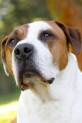 hundefotograf hannover hundefotografie hunde fotoshooting-12