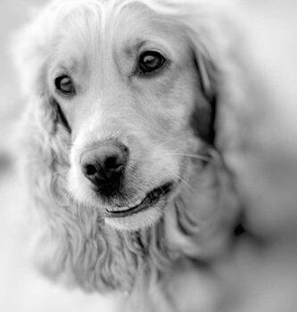 hundefotograf hannover hundefotografie hunde fotoshooting-14